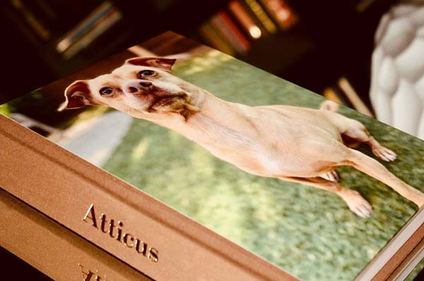 stack of books with full-cover image of a dog